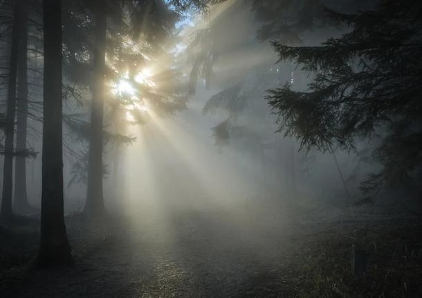 В Подмосковье ожидается туман